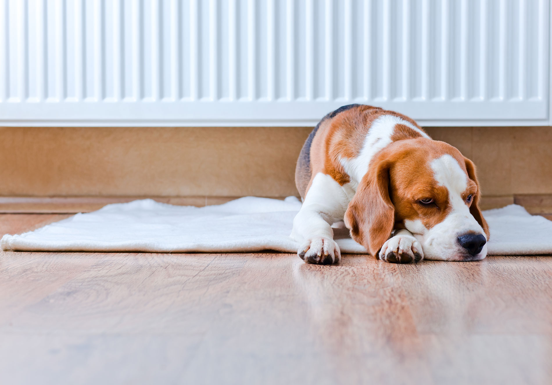 Buying a new heater? Here's our Winter Heating Guide: Electric heating
